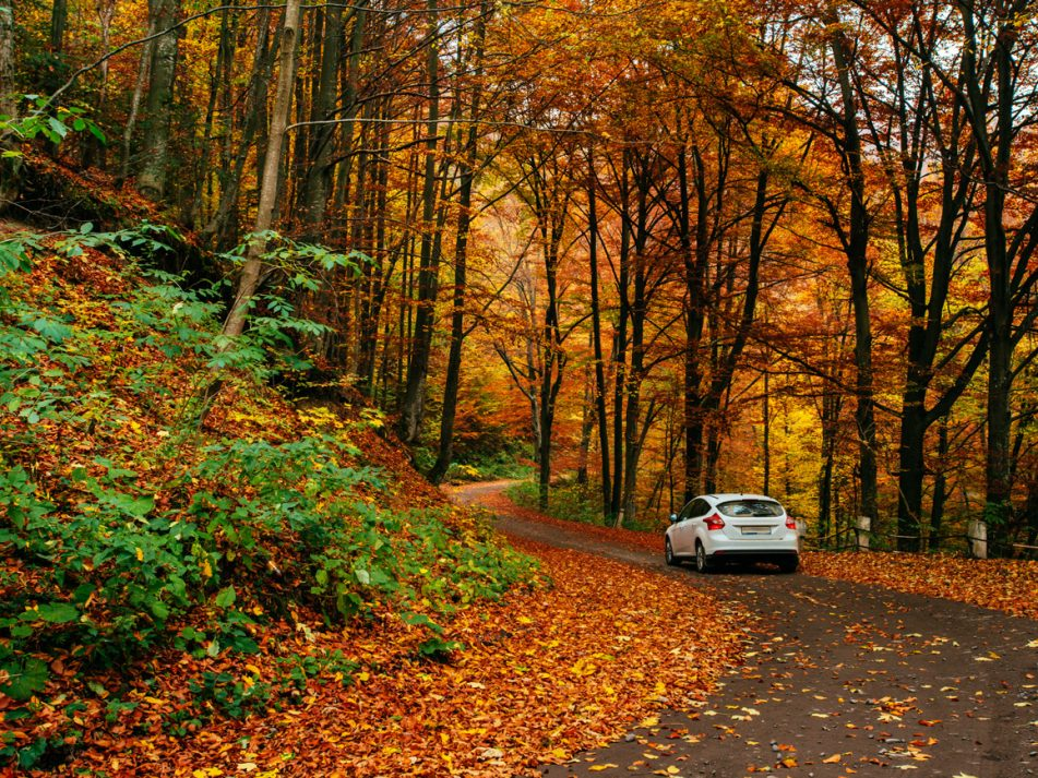 A car driving along a windy road surrounded by autumn leaves