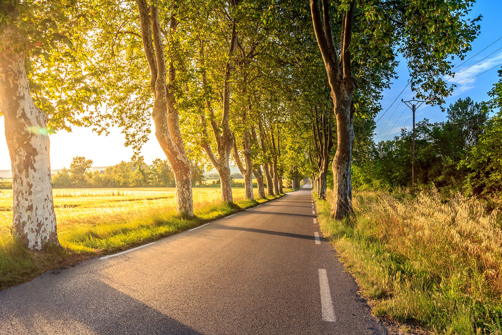 The sun rising behind a country road surrounded by green fields and budding trees