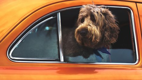 A dog looking out a window of a car